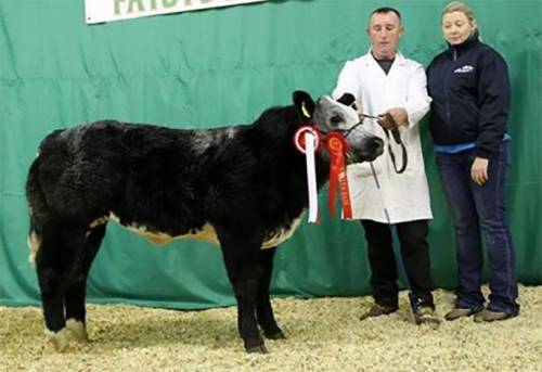 Elite Forever Brill Calf Sells for €5000