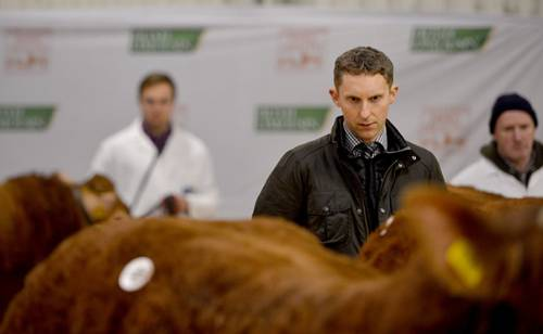 Judge at Premier Limousin Sale Roscrea, Southern Ireland