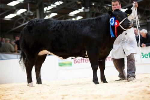 Reserve Champion Beef Expo 2013