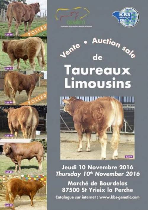 Sale of Young Breeding Bulls 10th of November 2016 at St Yrieix la Perche