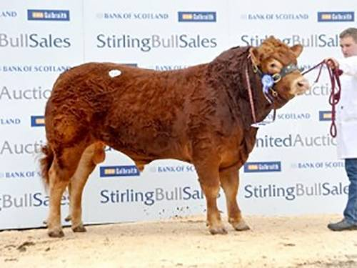 TIGRIS Son Tops Stirling at 8,000 gns