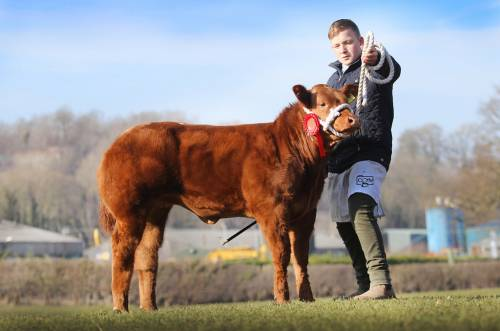 Heifer Calf Sells for £3250 at Ruthin Show Potentials for Tyisaf, Erwood