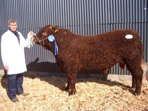 New LATASTER ERIC (SALERS) Semen Available