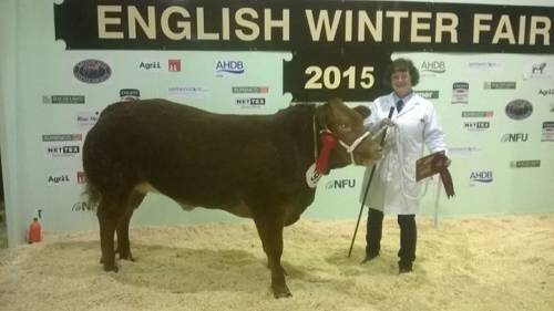 Doudou Heifer wins Champion Homebred and Fed Animal at EWF