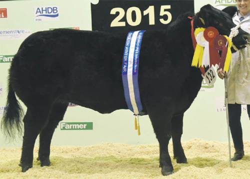 Cromwell Gunner Success at Winter Shows
