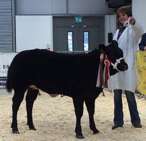 'Read All About It' takes Butchers Select Champion at Welsh Winter Fair