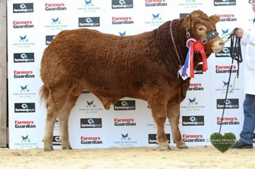 Roxburgh Homeland Reserve Champion Stars of The Future Calf Show