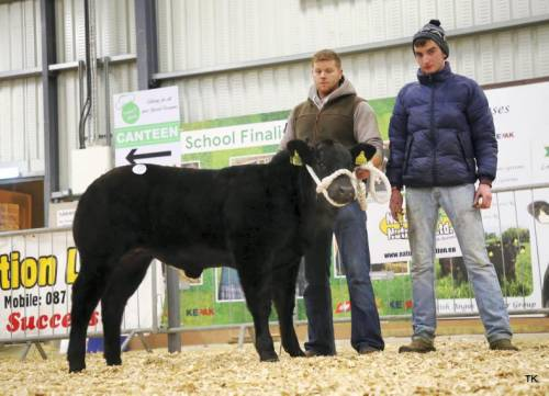 Elite Forever Brill Heifer Calf Sells for €6200