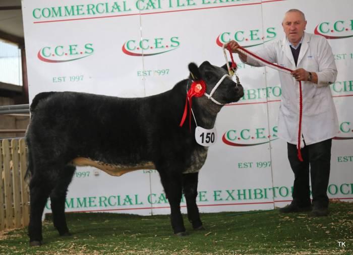 Champion A.Angus Crossbred Calf