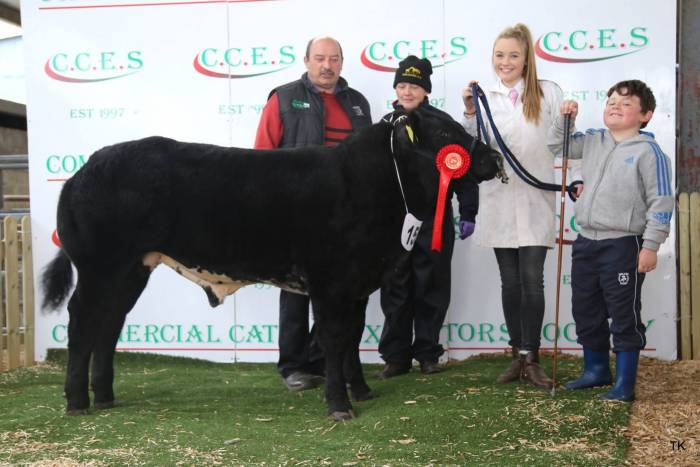 Champion Male Calf under 500 kg