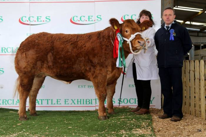 Champion Breeding Heifer