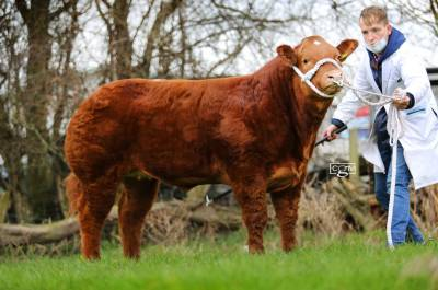 Miss TikTok sells for £3700 at Ruthin