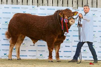 GOLDIES JACKPOT Sires 'Stars of the Future' Interbreed Champion