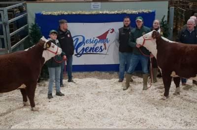 DENDOR 1 KOHINOOR In Calf Heifer Sells for 7,000 gns