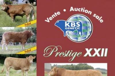Prestige XXII Sale at Brive, France 19th of August 2017