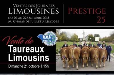 Prestige 25 - Sale of 60 Breeding Bulls - Sunday 21st of October