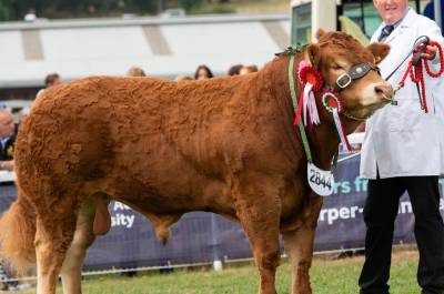 Elite Forever Brill Son - Male Champion at Royal Welsh Show