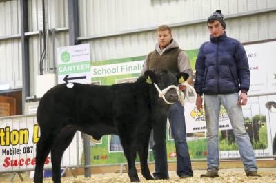 Elite Forever Brill Heifer Calf Sells for €6200