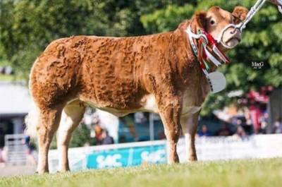 Supreme Champion Commercial Beef Royal Welsh goes to Garthiaen