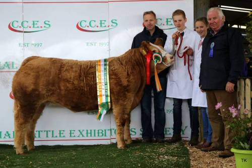 Lisnagre Elite sires Champion 'Supermarket' Heifer