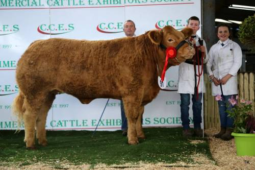 Elite FOREVER BRILL Progeny dominate at Roscommon Winter Fair