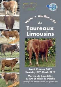 St Yreix Sale of Young Limousin Breeding Bulls 23rd of March 2017