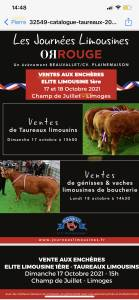 Sale of 32 Limousin Bulls - Limoges 17/10/2021