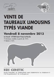 Sale of Young Pedigree Limousin Bulls